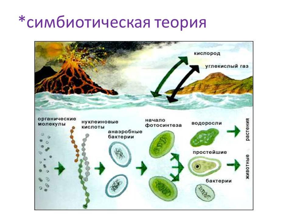 в эволюция таблице микроорганизмов